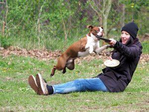 Seidensticker Hundeschule Bruns