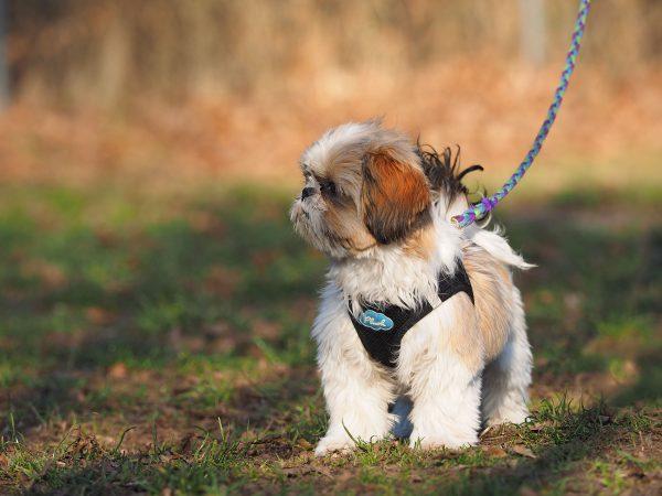Seidensticker Hundeschule 14