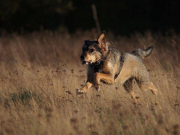Hundeschule Bruns