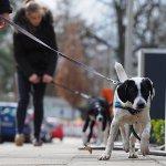 Seidensticker Hundeschule 33