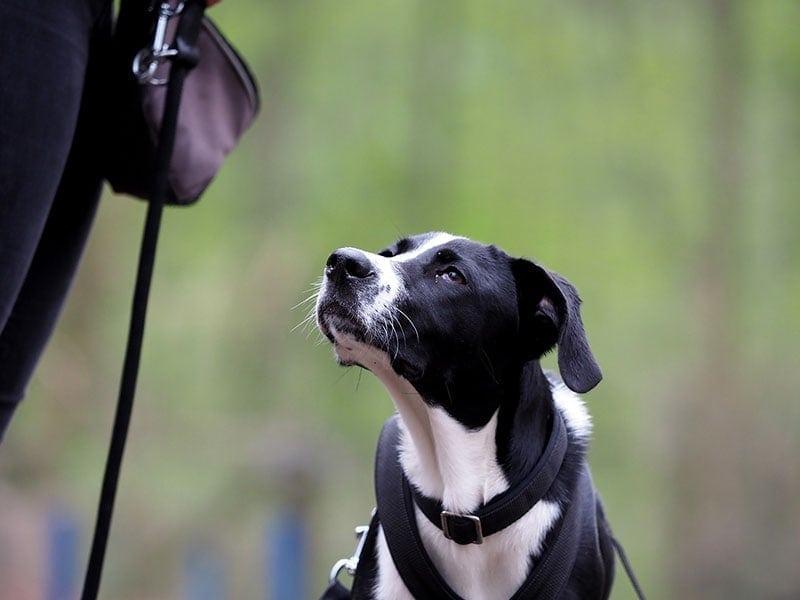 Hundeschule Bruns - Seidensticker