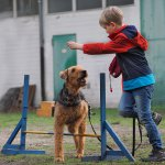 Seidensticker Hundeschule 43