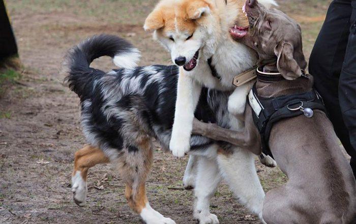 Hundeschule Bruns Seidensticker