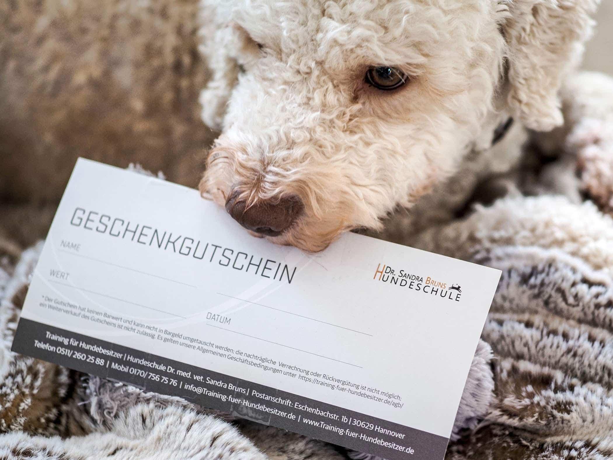 Gutschein Hundeschule Bruns