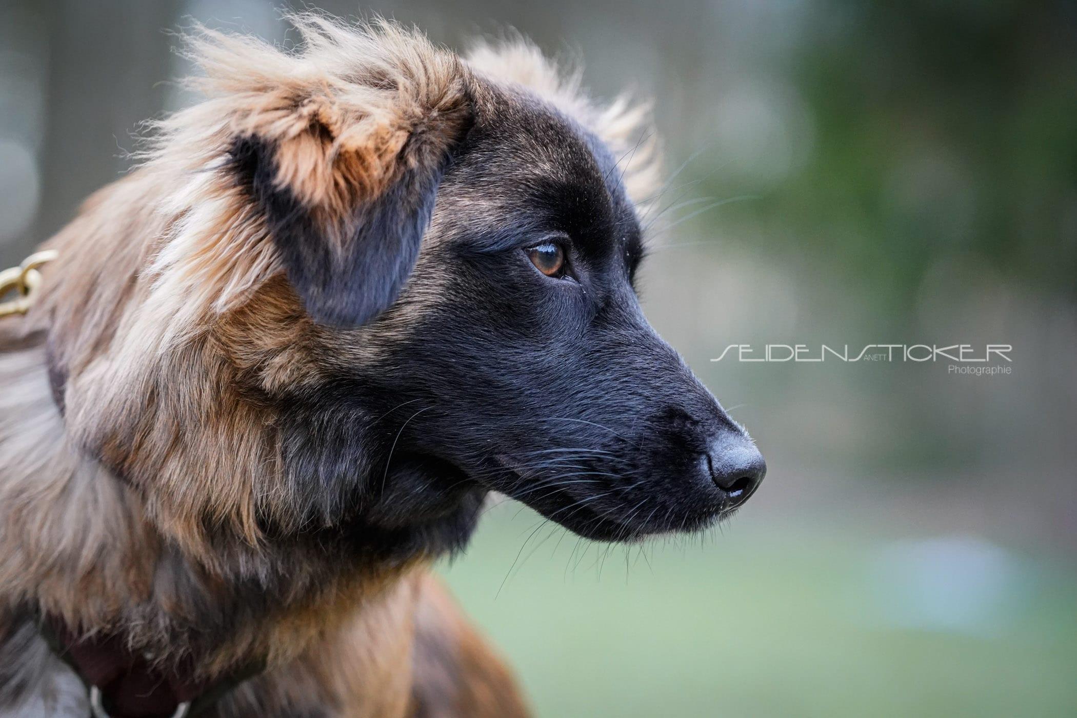 Seidensticker Welpen Junghunde Februar 2020 101
