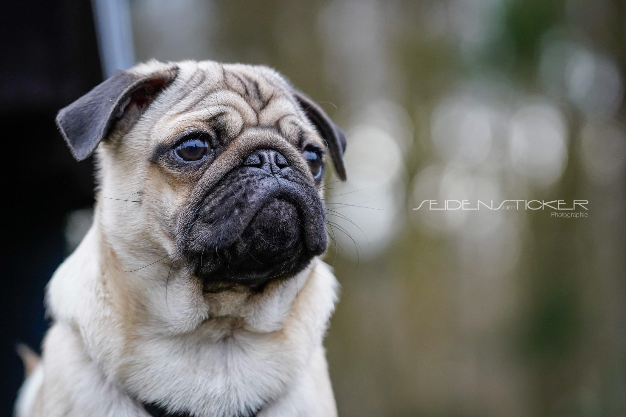 Seidensticker Welpen Junghunde Februar 2020 104