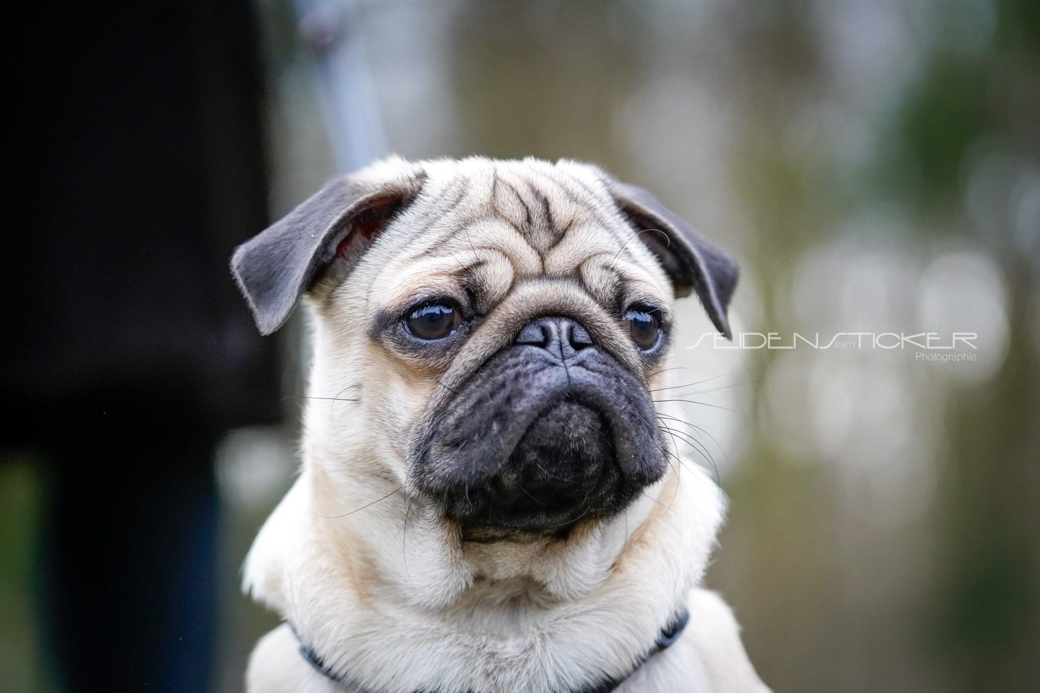 Seidensticker Welpen Junghunde Februar 2020 116