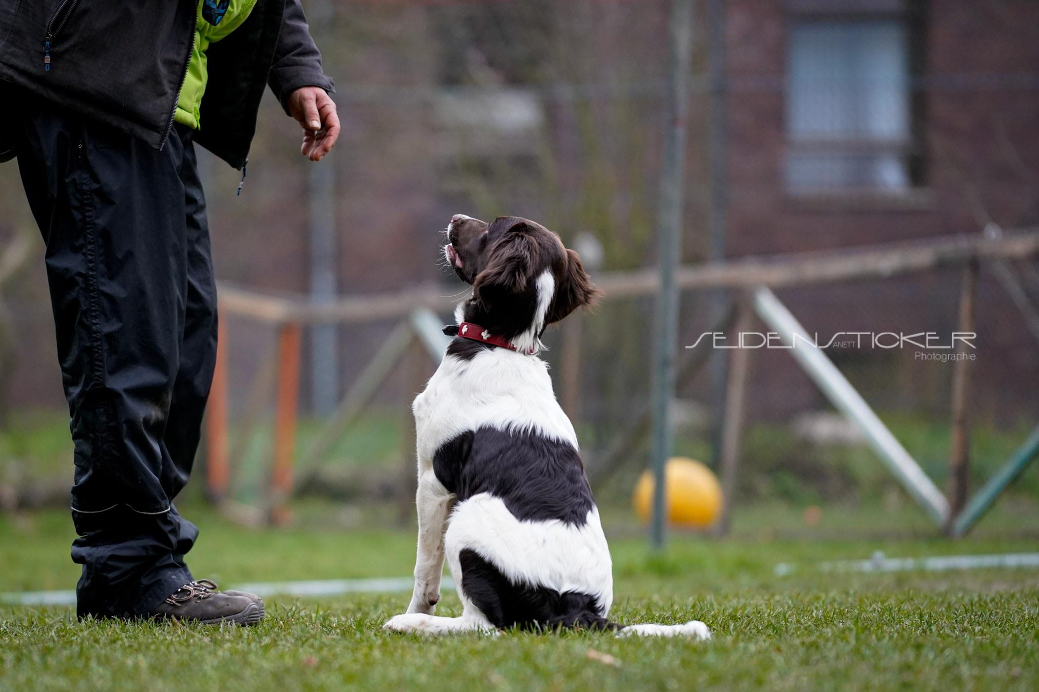 Seidensticker Welpen Junghunde Februar 2020 156