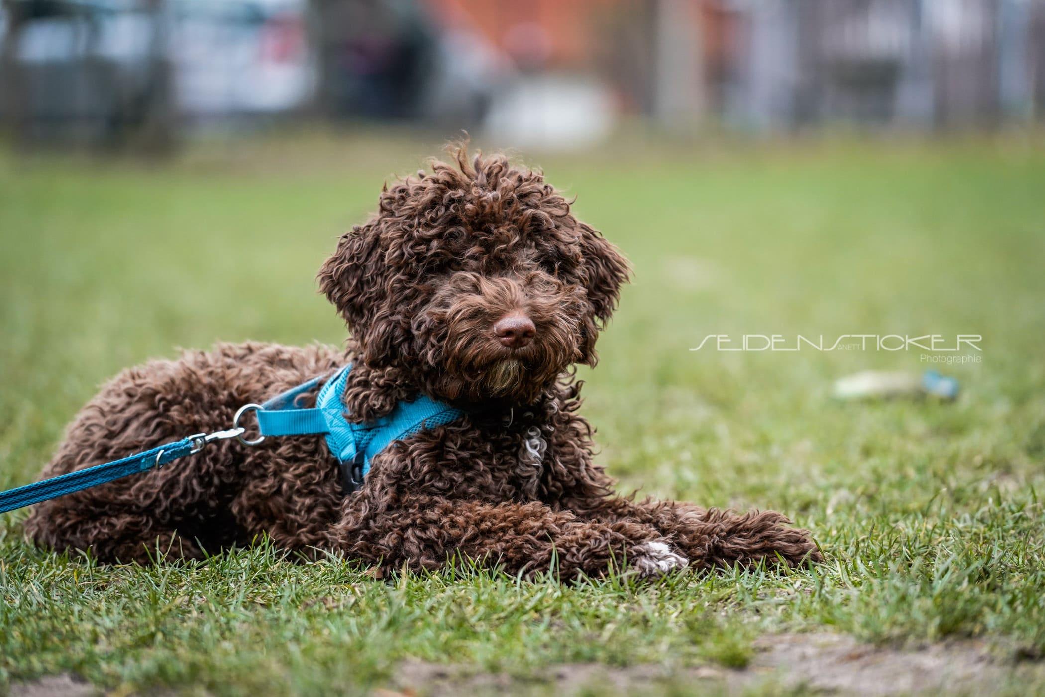 Seidensticker Welpen Junghunde Februar 2020 162