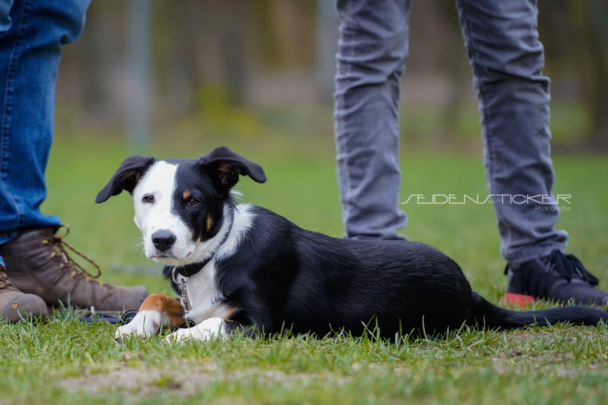 Seidensticker Welpen Junghunde Februar 2020 163