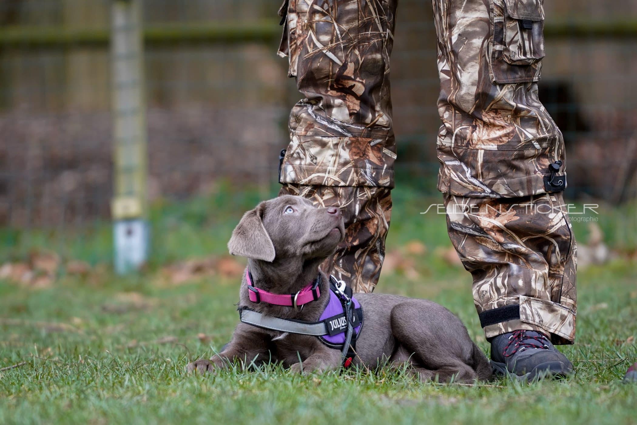 Seidensticker Welpen Junghunde Februar 2020 168