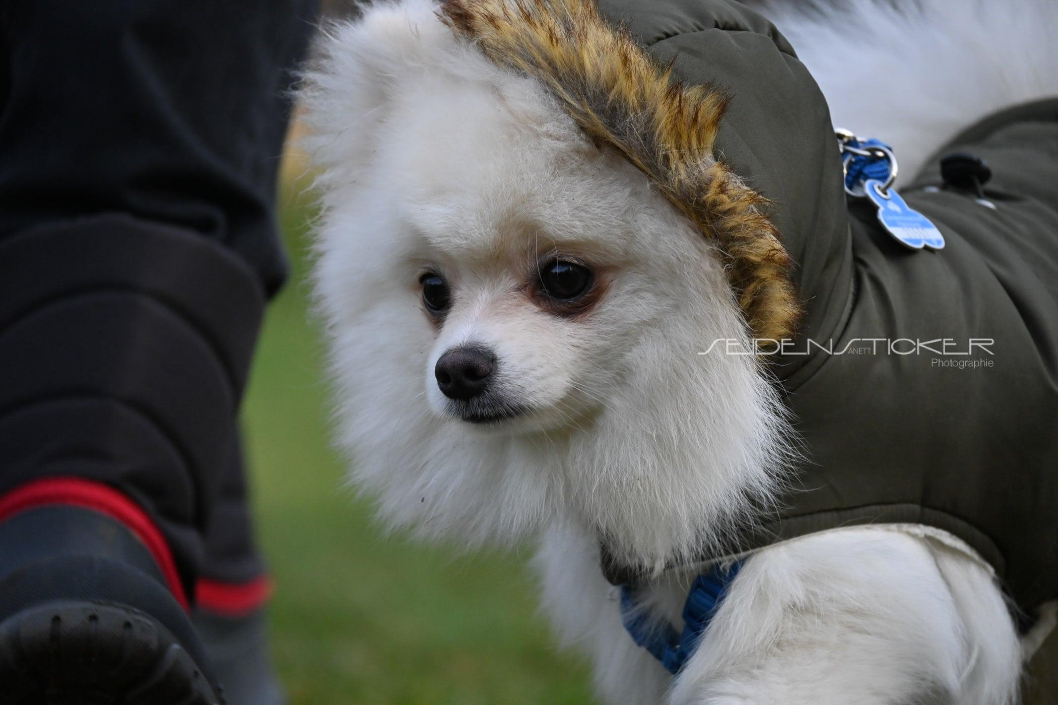 Seidensticker Welpen Junghunde Februar 2020 18