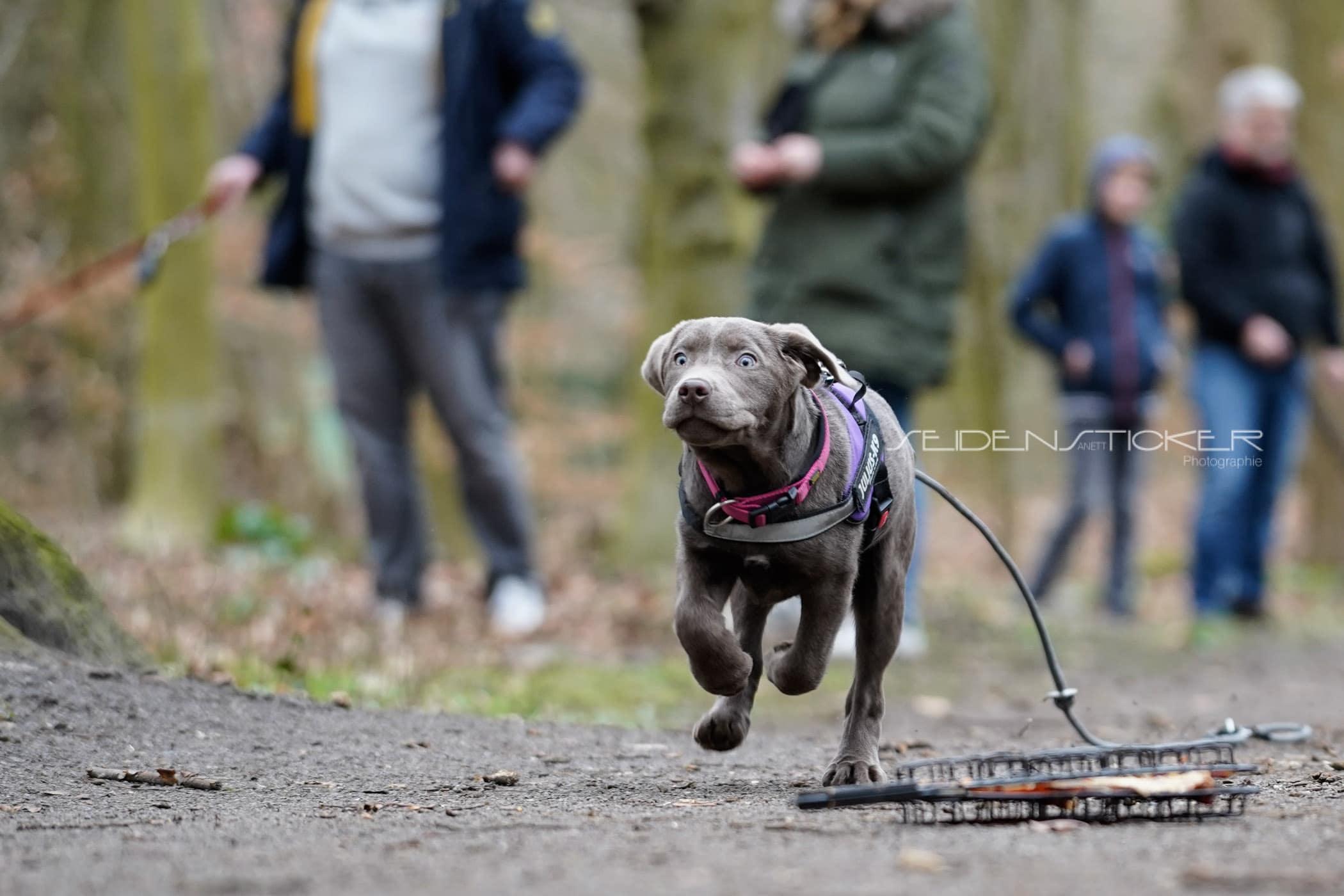 Seidensticker Welpen Junghunde Februar 2020 200