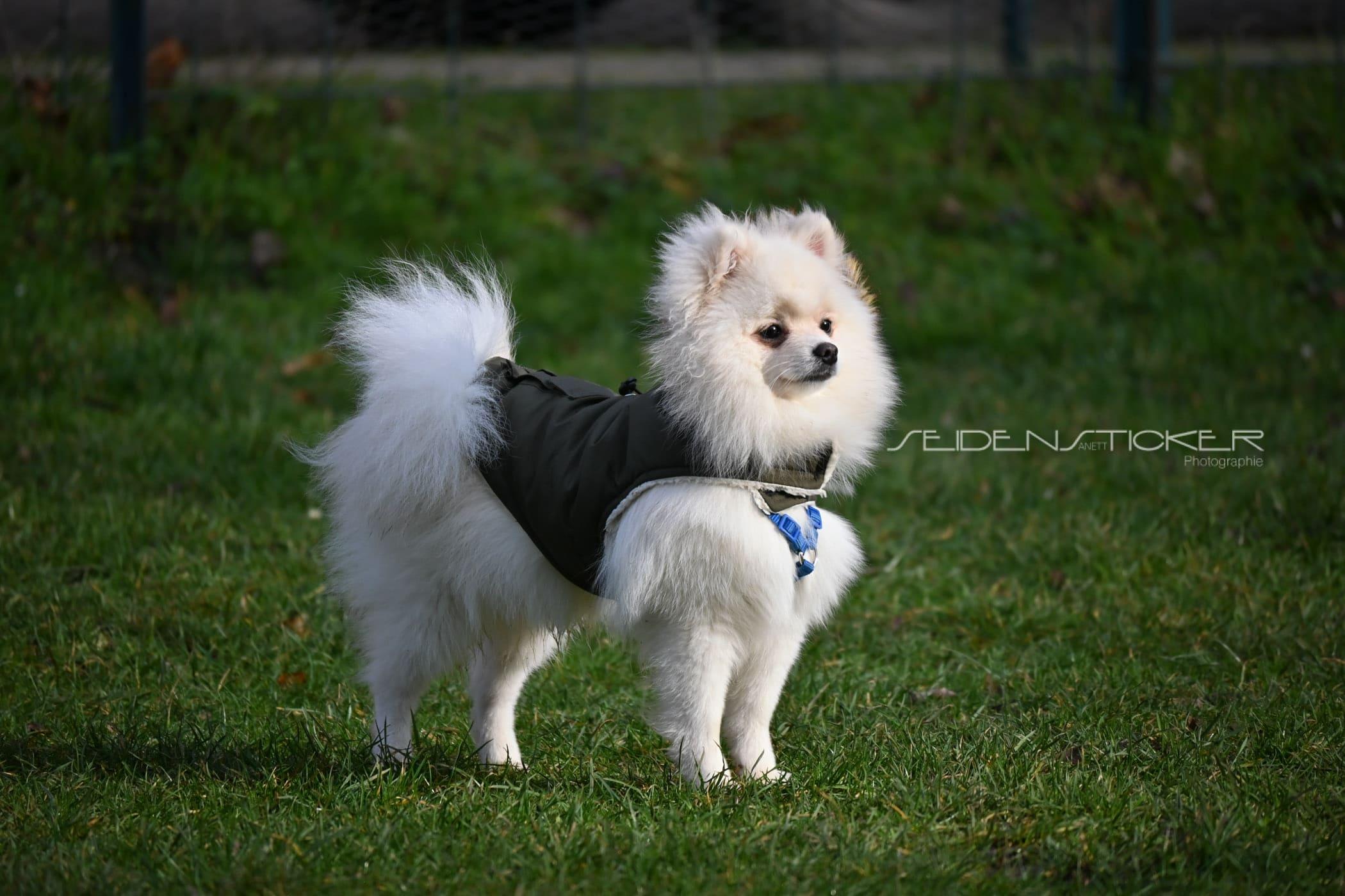 Seidensticker Welpen Junghunde Februar 2020 23