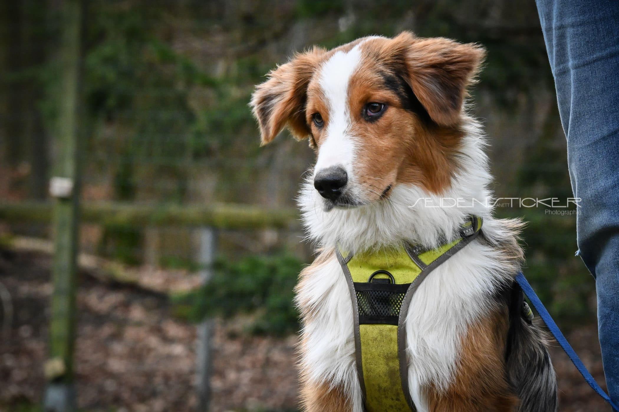 Seidensticker Welpen Junghunde Februar 2020 3