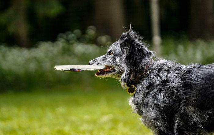 Seidensticker Fotografie Hannover - Hundeschule Bruns