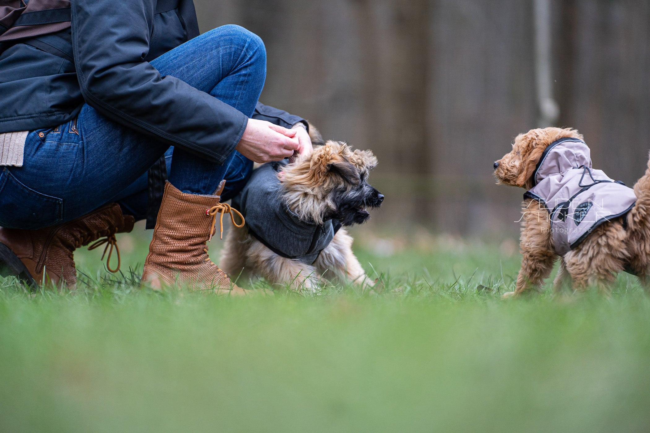 Seidensticker Fotografie - Hundeschule Bruns, Hannover
