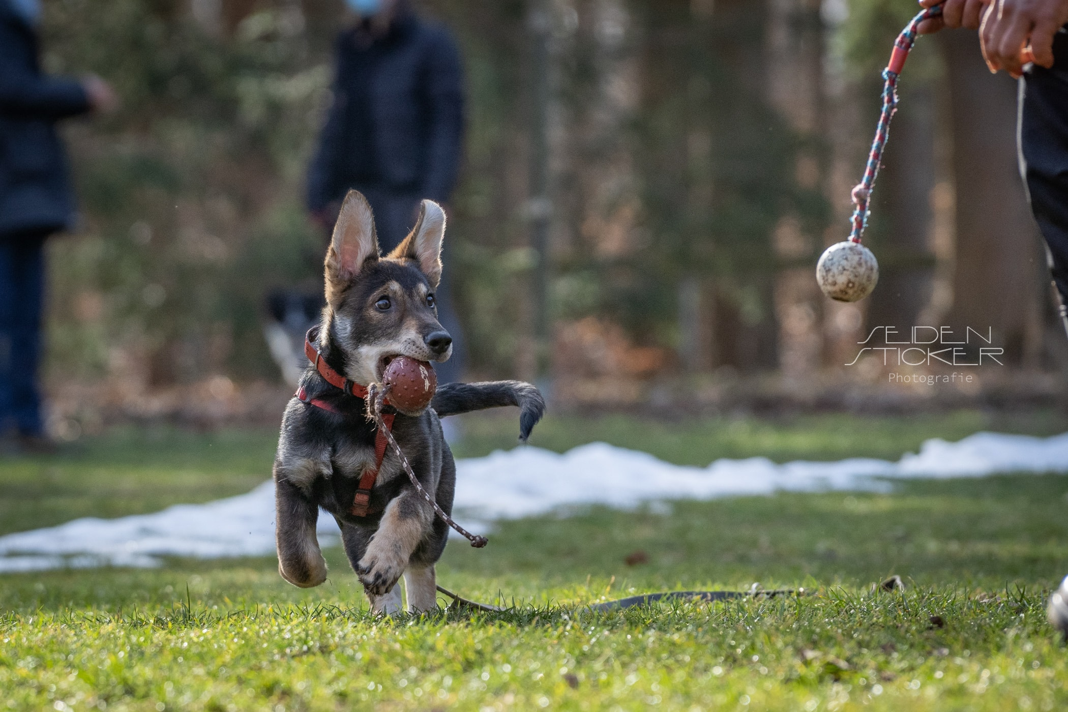 Anett Seidensticker Fotografie Hannover - Hundeschule Bruns