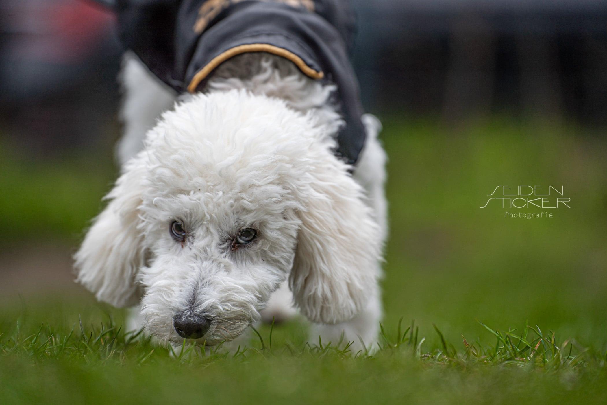 Hundeschule Dr. Sandra Bruns - Anett Seidensticker Fotografie