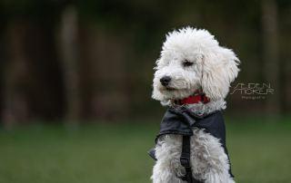 Hundeschule Dr. Sandra Bruns - Foto: Anett Seidensticker