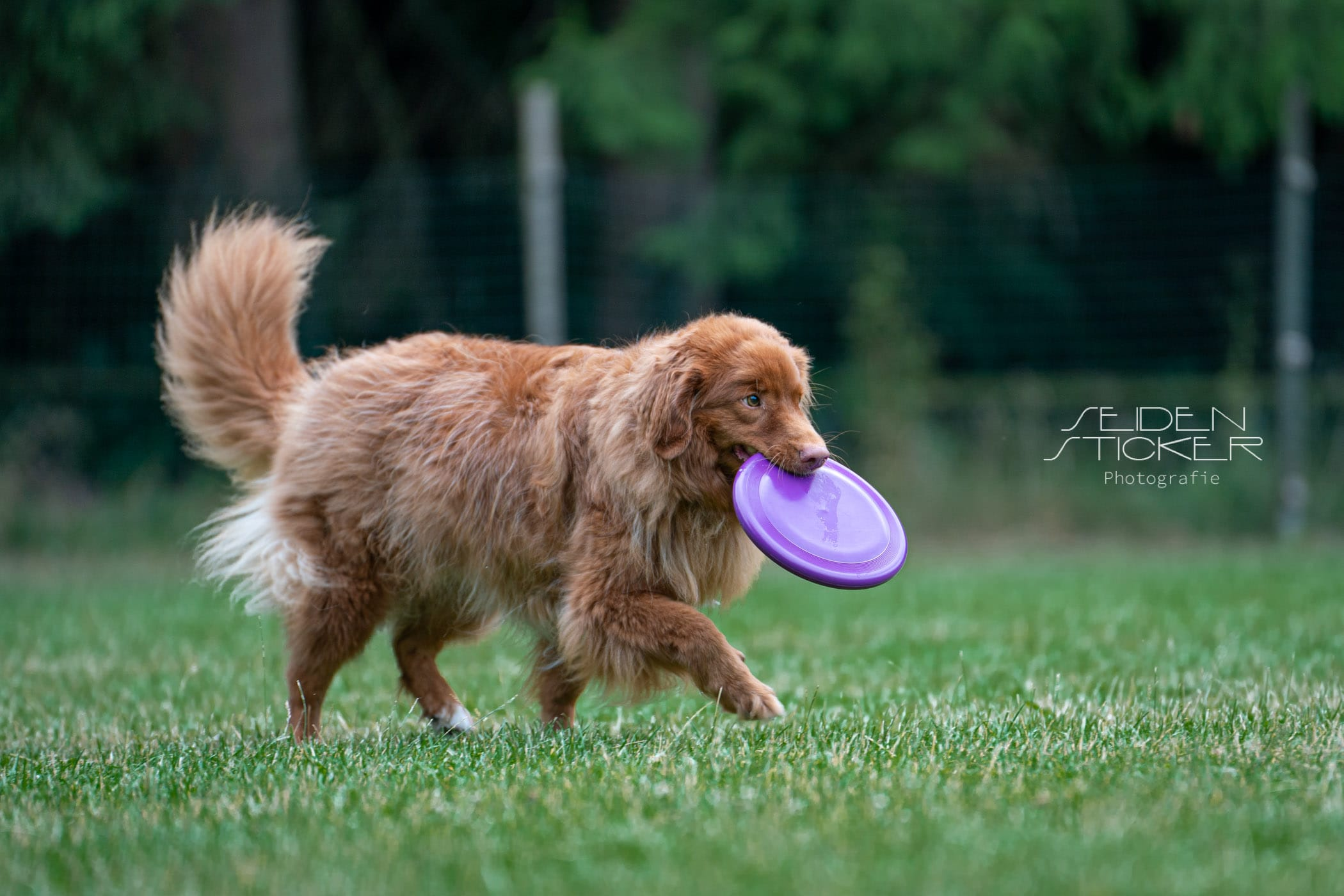 Seidensticker Frisbee Juli 2021 136